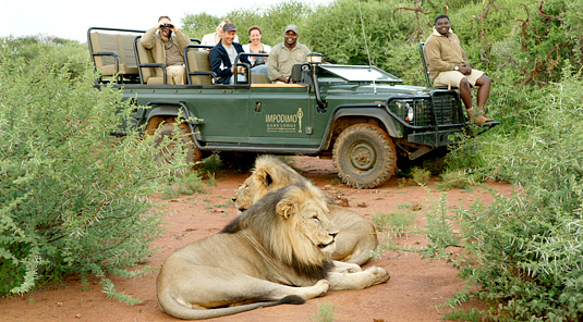 Impodimo Game Lodge - Madikwe Game Reserve - Game Drives, Lion Sighting