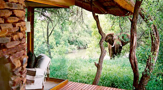 Makanyane Safari Lodge - Madikwe Game Reserve - Suite View & Elephant