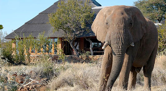 Madikwe Game Reserve - Rhulani Safari Lodge - Lodge with Elephant