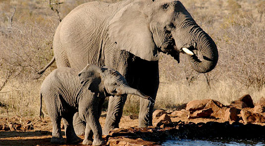 Madikwe Game Reserve - Rhulani Safari Lodge -  Elephants at the Waterhole