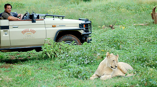 Madikwe Game Reserve - Rhulani Safari Lodge - Lion Sighting on Game Drives