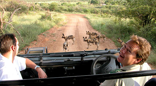 Madikwe Game Reserve - Rhulani Safari Lodge - Wild Dog Sighting on Game Drives