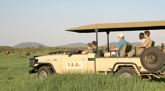 Game Drive Sighting - The Bush House - Madikwe Game Park